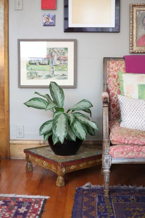 There are real benefits to placing plants around your home or workspace. One benefit being they can help purify the air, removing harmful toxins. Are you looking to add some plants to your space? Here are 11 houseplants that can improve the air quality in your home! #houseplants #plants #airpurifyingplants #home #interiors #wellness #selfcare