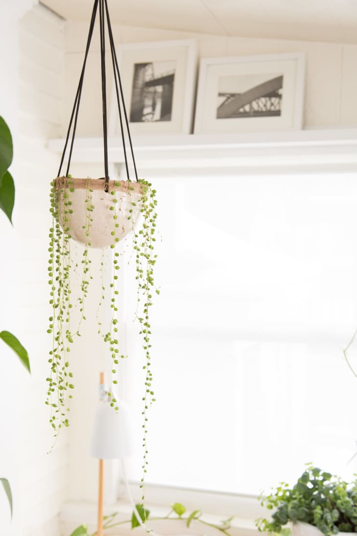 Source: apartmenttherapy.com // Are you looking to add more plant life to your space?  Not sure where to start?  Check out today's Plant Love, String of Pearls Edition!  #tulipandsage #stringofpearlsplant #stringofpearlsplantcare #howtocareforstringofpearlsplant