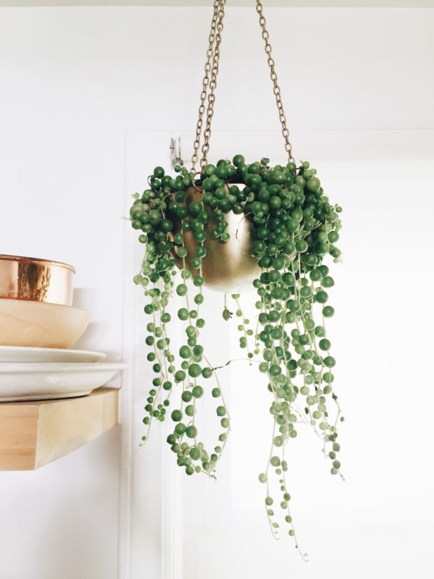Source: bevcooks.com // Are you looking to add more plant life to your space?  Not sure where to start?  Check out today's Plant Love, String of Pearls Edition!  #tulipandsage #stringofpearlsplant #stringofpearlsplantcare #howtocareforstringofpearlsplant