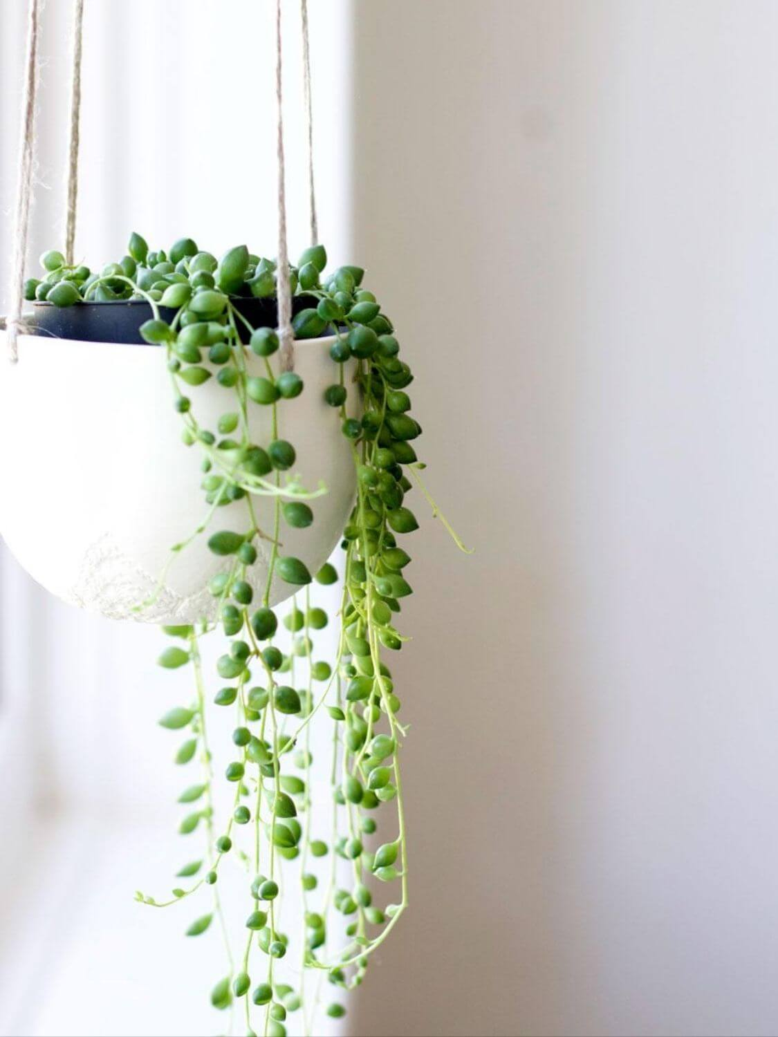 Source: lobsterandswan.com // Are you looking to add more plant life to your space? Not sure where to start? Check out today's Plant Love, String of Pearls Edition! #tulipandsage #stringofpearlsplant #stringofpearlsplantcare #howtocareforstringofpearlsplant
